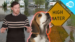 BrainStuff: Can Animals Predict Natural Disasters?