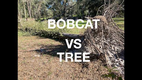 BOBCAT VS TREE