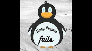 Funny penguin fails