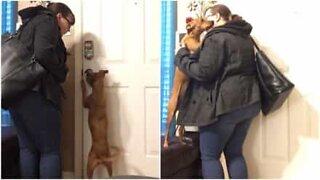 Cette chienne fait tout ce qu'elle peut pour sortir avec sa maîtresse