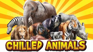 Awesome Chilled Out Wild Animals