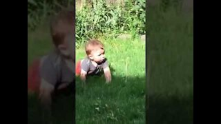 Babies With Puppies Playing Together   Cute Dog Videos