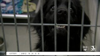Neglected dogs get a second chance with help from NHS