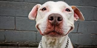 Dette er byens gladeste hund