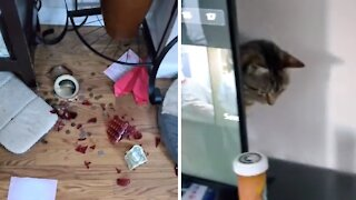 Cat breaks swear jar, tries to slowly disappear