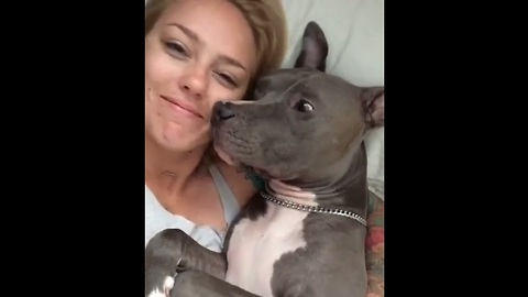 Sweet Pit Bull Gives Kisses After Waking Up