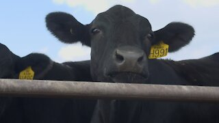 Cattle Ranchers Set Environmental Sustainability Goals