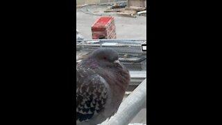 Bird in winter at Subway station