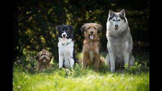 Three wonderful dogs