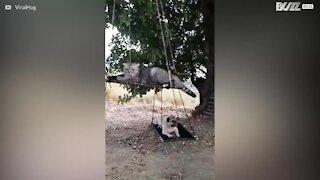 Mops och katt testar ziplining
