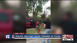 Future police and military K9s train in Tulsa
