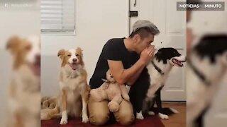 Dono conta segredos para seus cães!