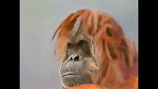 Mind-blowing Photoshop speed painting of orangutan photo