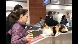 Next Stop Cat Station