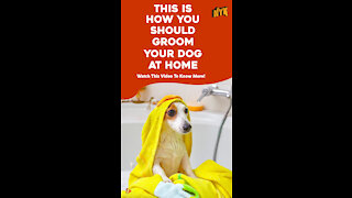 Top 4 Tips For Grooming Your Pet Dog At Home *