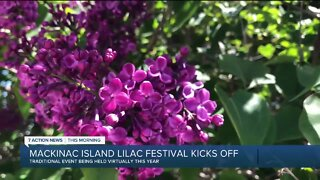 72nd Annual Mackinac Island Lilac Festival goes virtual