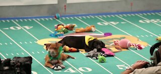 The Puppy Bowl will go on as scheduled