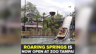 Roaring Springs water opens at ZooTampa   Taste and See Tampa Bay