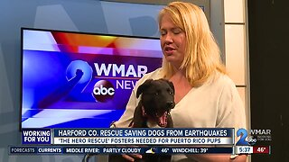 Harford County rescue saving dogs from earthquakes