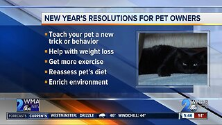 2020 resolutions for pet owners