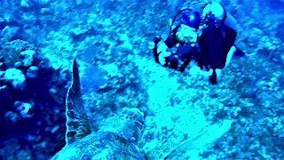 Gigantic sea turtle swims straight into scuba diver
