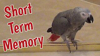 "Einstein the talking parrot has ""short term memory"""