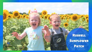 Russell Sunflower Patch | Richmond Missouri | What to do?
