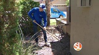 Got termites? Call Urban Desert Pest Control to get rid of pests