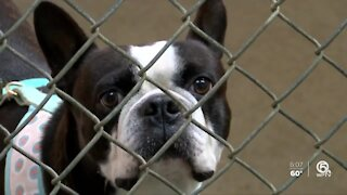 Tri-County Animal Rescue hoping for donations on Giving Tuesday