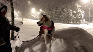 Dog Enjoys First Snowfall Of The Year