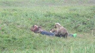 Curious bear approaches sleeping men