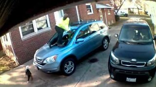 Scared delivery man jumps on hood to escape dog