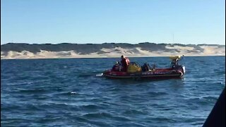 Humpback whale disentangled at Kowie River Mouth (Lnf)