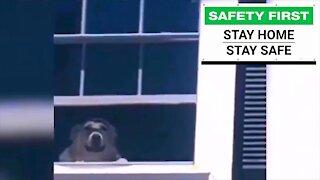 Smart dog staying home, staying safe!