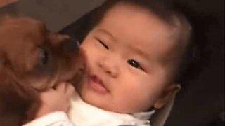 Cadelinha junta-se a bebé na sua cadeira em momento adorável