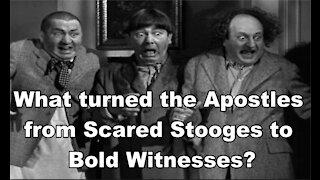 Bold Witnesses