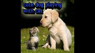Cute dog playing with cat