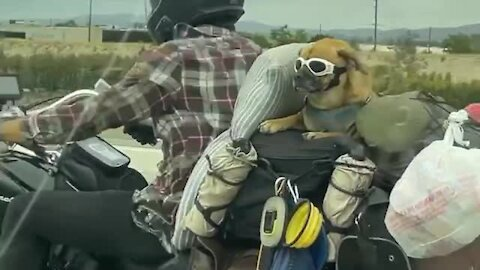 This dog was born to ride the open road