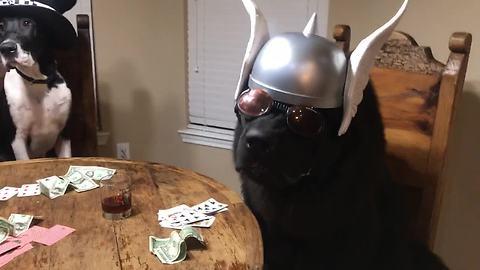 Dogs enjoy poker night in Texas