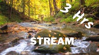 Relaxing Water | Flowing Stream | 3 Hrs ~ ASMR ~