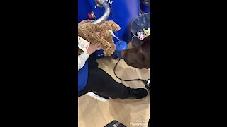 Dog chooses his own stuffed animal for first ever Build-A-Bear