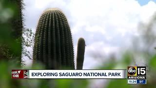 National Park celebrates 102nd birthday