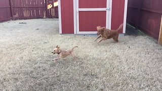 Two Dogs Love Playing!