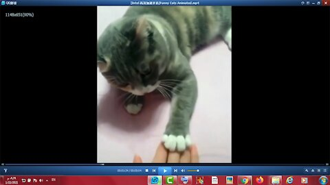 Very very funny cute cats