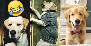 Labrador Dogs Being Adorable! Super Cute!