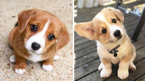 cute dog funny dog videos 2021