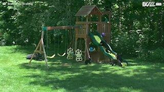 Une famille d'ours transforme son jardin en terrain de jeu