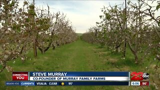 Murray Family Farms during Pandemic