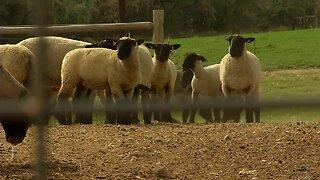 Twin Falls law firm hosts webinars to support farmers