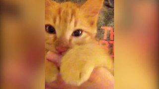 Kitten thinks her Human is her Mama